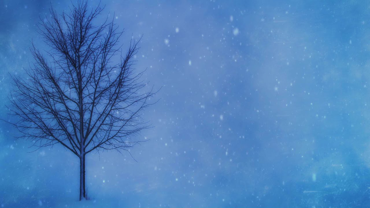 barren winter tree hd video background loop youtube