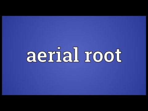 Aerial root Meaning