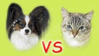 КОШКИ против СОБАК!!! Веселый ЮКИ против кота Сени / ЧЕЛЛЕНДЖ от папильона кто кого