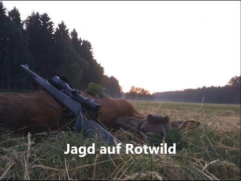 Jagd auf Rotwild 2018