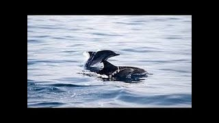 Nat Geo Wild HD Ocean of Giants National Geographic Documentary 2017 HD