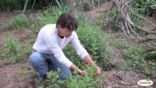 How To Prune Perennials