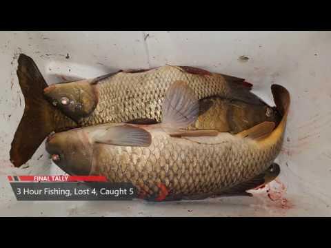 2018 Guelph Lake Carp Fishing, Ontario
