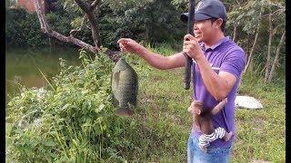 Baby Monkey Doo / Go Fishing - Funny Animals