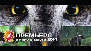 Чудесный лес (2014) HD трейлер | красивая природа в фильме из Финляндии