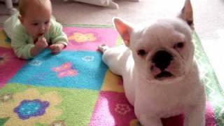 「ハイハイはこうやるんだワン!」赤ちゃんにコーチする優しいフレブル