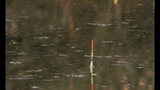 Ловля карася на поплавок весной. Рыбалка на маховую удочку 2019.
