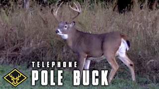 "The ""Telephone Pole"" Buck"