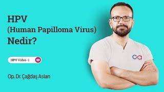 hpv humán papilloma vírus nedir)
