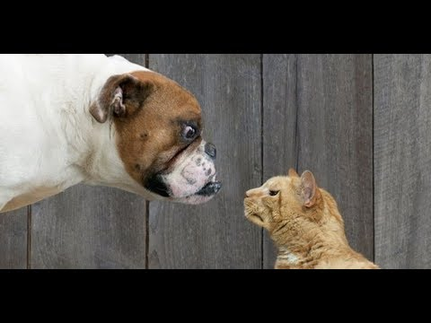 Very angry cats vs dogs. The best selection