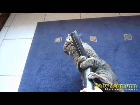 Lustige Videos _ Lustige Katzen und Staubsauger _ Katze videos zum totlachen #13