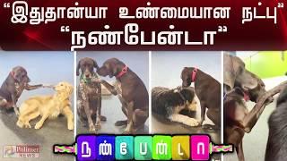 இது தான்யா உண்மையான நட்பு..! நண்பேன்டா..!   Cute dog   Friendship   Polimer News
