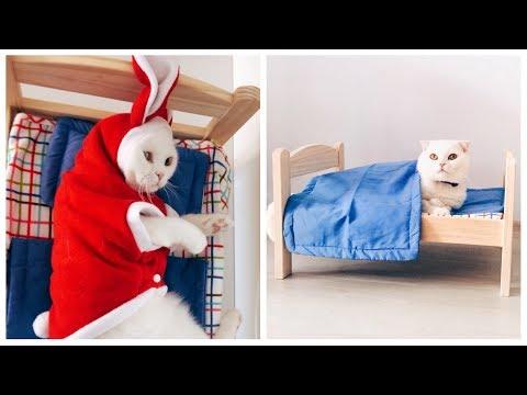 Kedim Coco'nun Yeni Yatağı Ve Kıyafetleri