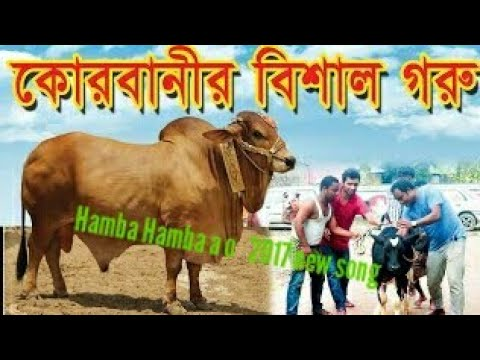 Hamba Hamba a o new 2017 song qorbani Eid ar song