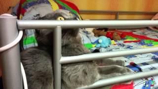 Кот завис и смотрит в пустоту