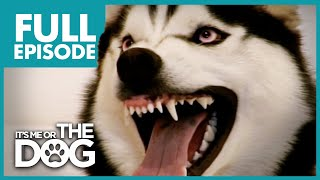 Download The Demon Husky: Diesel | Full Episode | It's Me or The Dog Mp3 and Videos