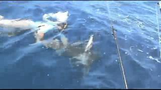 Осторожно! Тренировка с акулами!