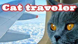 Как #перевезти #кошку из России в Европу. How to #transfer a #cat from Russia to Europe.