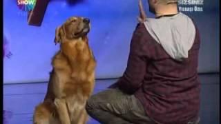 أذكى كلب في العالم (باسكال) 2012