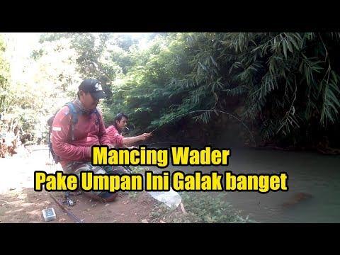 Mancing Wader Pakai Umpan Ini Gak Bakal Gagal, Tiny Creek Fishing