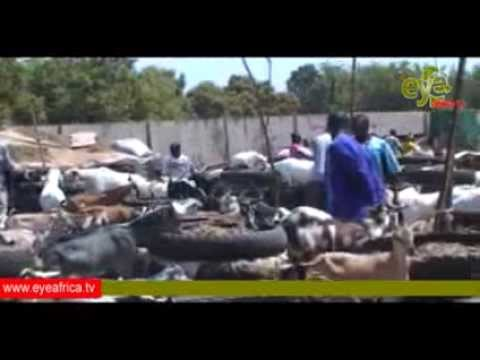 Livestock business gaining momentum in Abuko, The Gambia