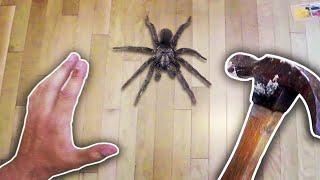 Killing a Spider