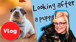 Getting a puppy is the best thing you'll ever do, but nobody has ev...