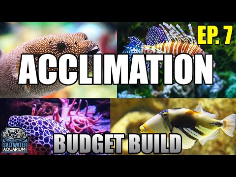 ACCLIMATING Your New Fish - Float Vs Drip Acclimation Beginner Saltwater Budget Aquarium