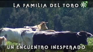 Becerrito de Prieto de la Cal: Vida y muerte | Toros desde Andalucía