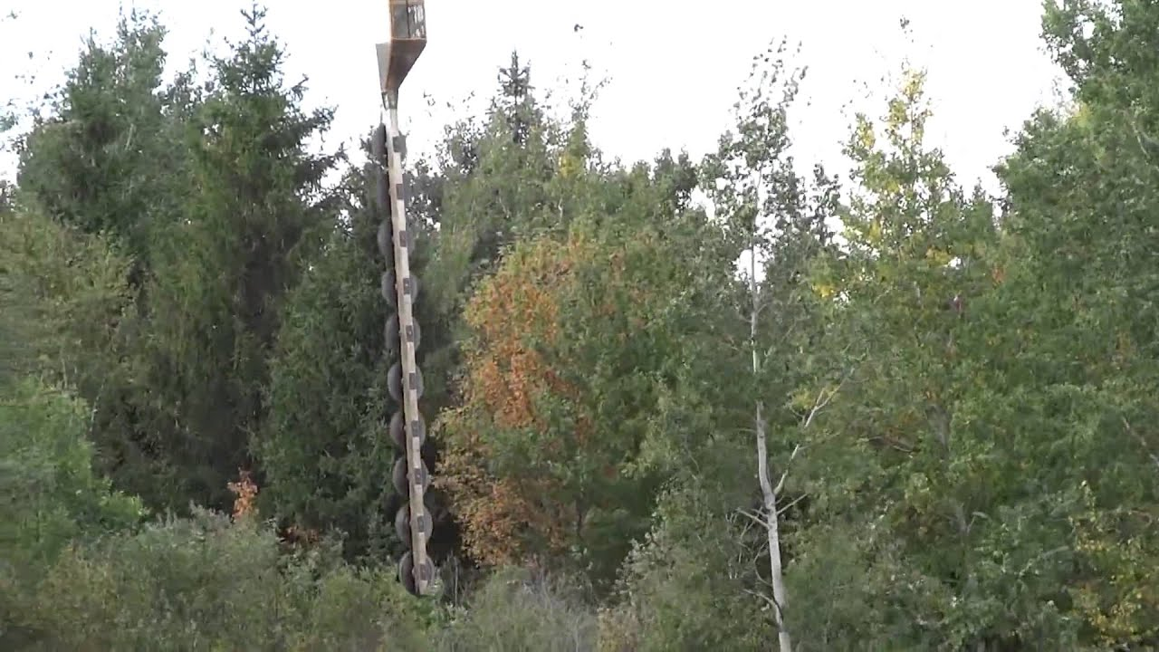 trimming trees by power