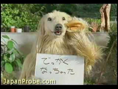 Funny Asian Commercials 22