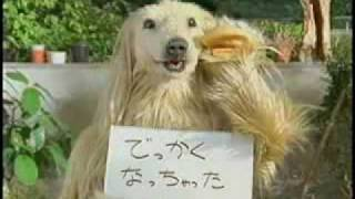Funny Japanese Commercial