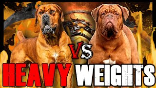 Boerboel vs Dogue de Bordeaux | Dogue de Bordeaux vs Boerboel | Powerful Guard Dog? | Billa Boyka |