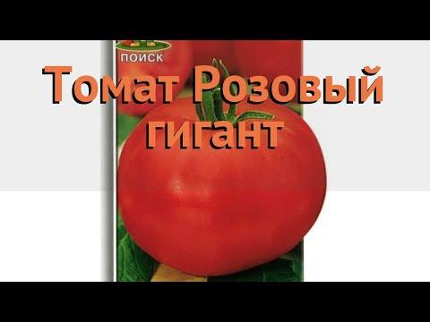 Томат обыкновенный Розовый гигант (rozovyy gigant) 🌿 обзор: как сажать, семена томата Розовый гигант