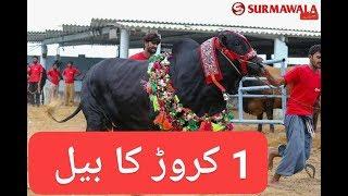 1 CRORE ka janwar in Sohrab Goth Cow mandi part-2 vlog#35