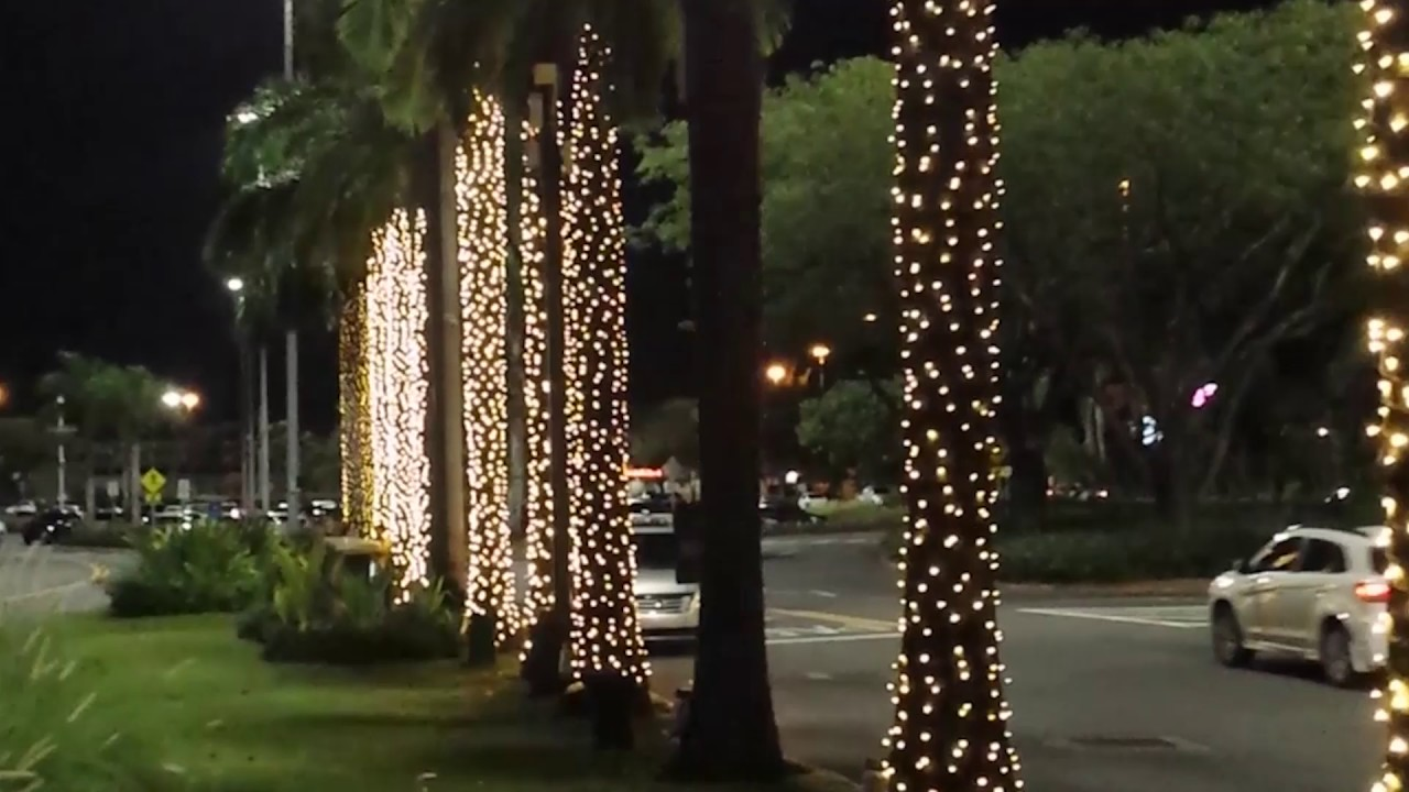 Palm Trees Light Chasing - YouTube