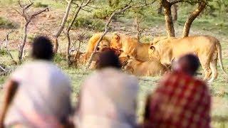 Ils volent le repas de 15 lions affamés ! - ZAPPING NOMADE