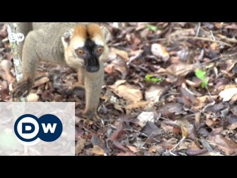 The Red List Of Threatened Species | Global 3000
