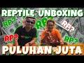 Unboxing Puluhan Ekor Sulcata Perawatan Feat Dunia Satwa  Mp3 - Mp4 Download