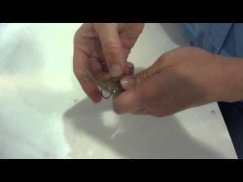 Half Hitch - Rigging Live Shrimp