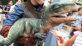 Raptor Encounter with Blue and Baby Tango in Jurassic World at Universal Studios Hollywood