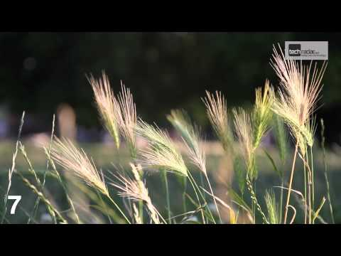 Canon EOS 7D video quality