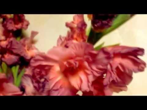 ГЛАДИОЛУС-ЦВЕТОК ГЛАДИАТОРОВ Легенда о цветке.