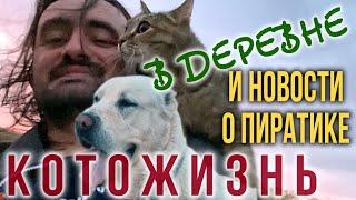 Дом милый дом + Новости по Пиратику 😻 КОТОЖИЗНЬ!