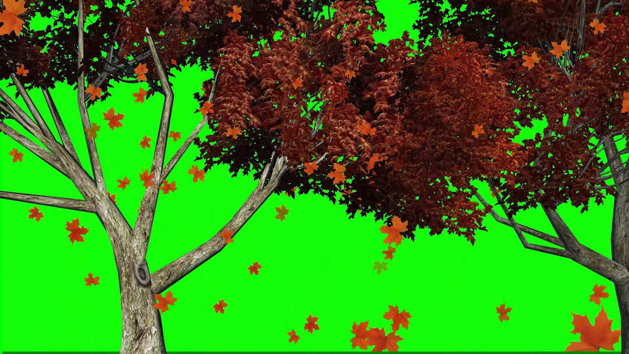 Autumn Leaves Falling From Tree Green Screen Video Youtube