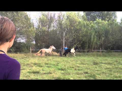poney et raiku