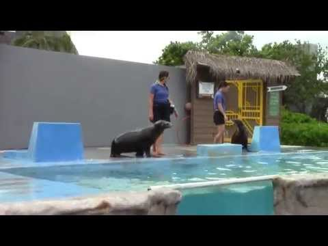 Sea Lions are Funny Animals from Sea Life Park Hawaii