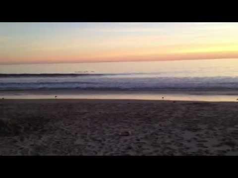 Sunset 2: pelicans