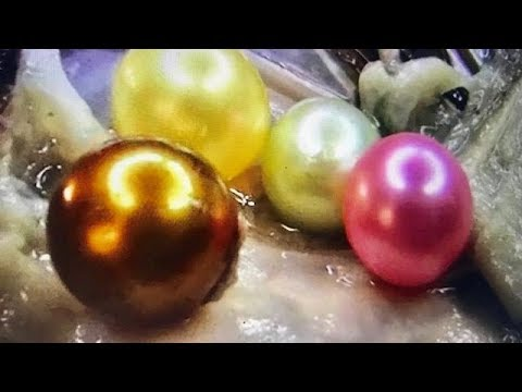 RIVER GOLD PEARL FOUND IN OYSTER... On FUN HOUSE TV