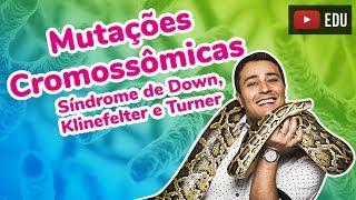 Mutações Cromossômicas - Síndrome de Down, Klinefelter e Turner - Prof. Paulo Jubilut